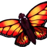 BUTTERFLY – MONARCH